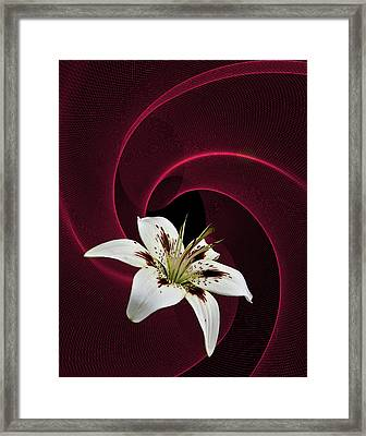 Framed Print featuring the photograph Lilly White by Judy  Johnson