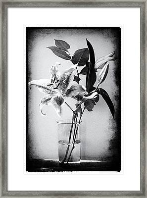 Lily 320bw Framed Print by James Bethanis