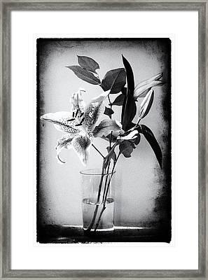 Lily 320bw Framed Print