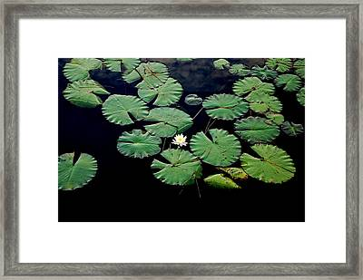 Lily Alone Framed Print by May Photography