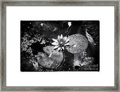 Framed Print featuring the photograph Lily At Camley Street I by Jack Torcello