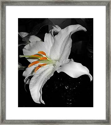 Lily Bell Framed Print by Sian Lindemann