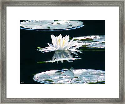 Lily Bliss Framed Print by Debra     Vatalaro