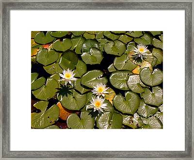 Framed Print featuring the painting Lily Blooms by Gretchen Allen