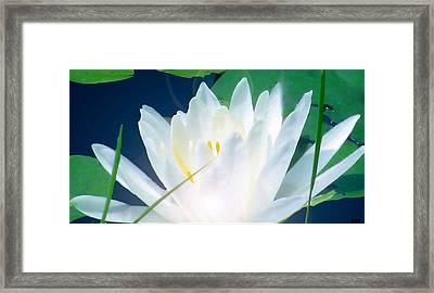 Lily Essence Framed Print by Debra     Vatalaro