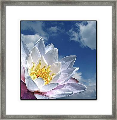 Lily Flower Against Sky Framed Print