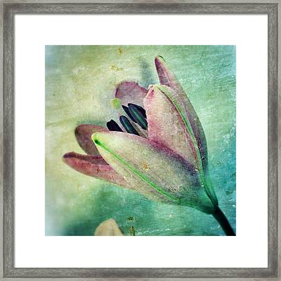 Lily In My Dreams Framed Print by Marianna Mills