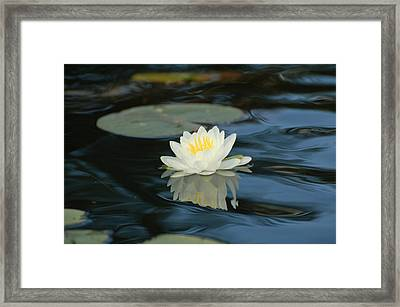 Lily In The Current Framed Print