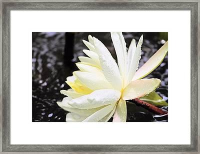 Lily In White Framed Print by Elizabeth Budd