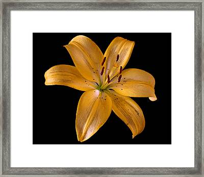 Lily Framed Print by Karen Harrison