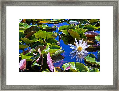 Framed Print featuring the photograph Lily by Lawrence Burry