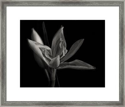 Lily Framed Print by Mario Celzner