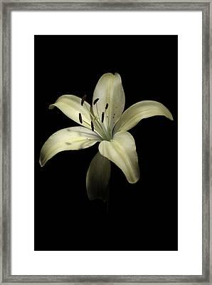 Lily Framed Print by Nathaniel Kolby