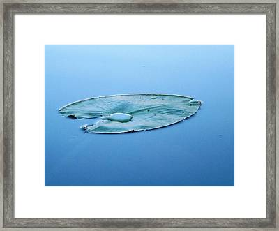 Lily Pad In The Sky Framed Print by Gerald Strine
