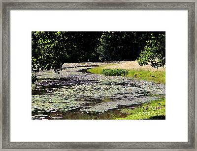 Lily Pad Lake 2 Framed Print by Pauline Ross