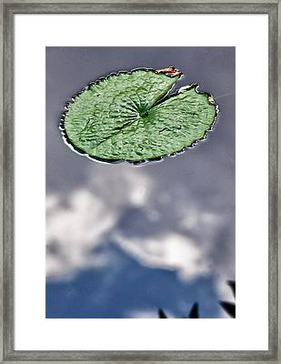 Lily Pad Framed Print by Robert Ullmann