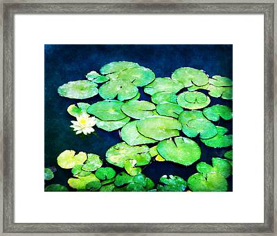 Lily Pads And Lotus Framed Print by Tammy Wetzel