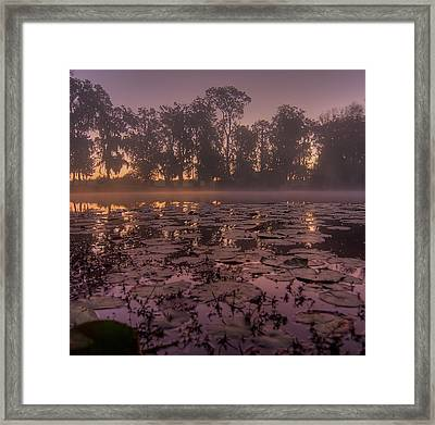 Framed Print featuring the photograph Lily Pads In The Fog by Dan Wells