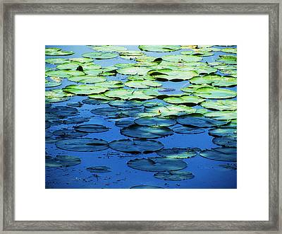 Lily Pads -one Framed Print by Todd Sherlock
