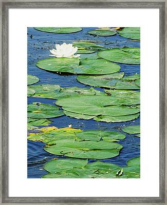 Lily Pads-two Framed Print by Todd Sherlock