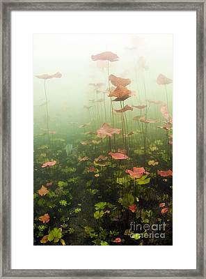 Lily Pads Underwater In Cenote Framed Print