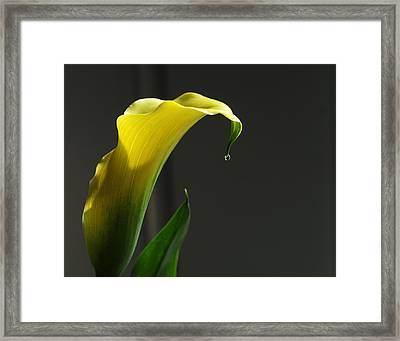 Lily Pitcher Framed Print