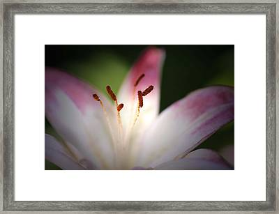 Framed Print featuring the photograph Lily by Renee Hardison