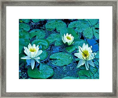Lily Three Framed Print by Debra     Vatalaro