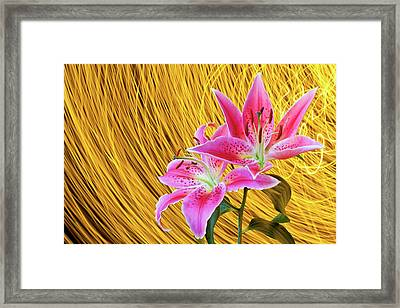 Lily With Light Trails Framed Print