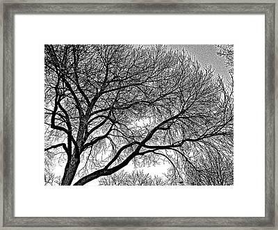 Limbeaux Framed Print by Dan Stone