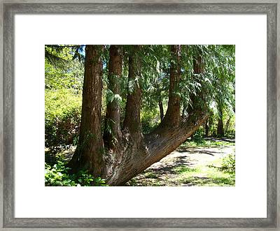 Limbs To Trees Framed Print by Nick Kloepping