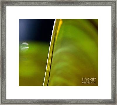 Lime Abstract Framed Print by Dana Kern