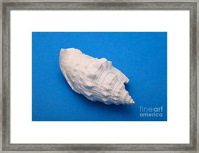 Lime Made From A Seashell Framed Print by Ted Kinsman
