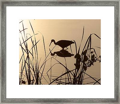 Limpkin At Dawn Framed Print