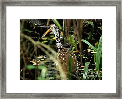 Limpkin Framed Print by Theresa Willingham