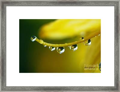 Line Of Raindrops Framed Print by Yumi Johnson