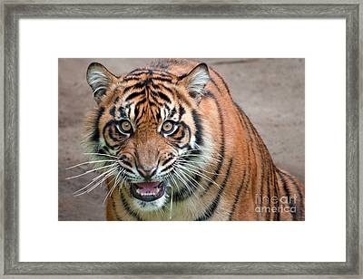 Line Of Sight Framed Print by Dan Holm