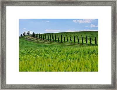 Lined Up Framed Print