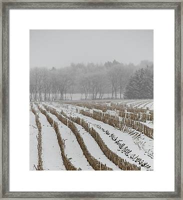 Lines In The Snow Framed Print