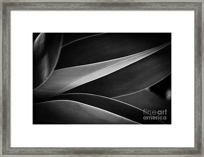 Lines Of Life Framed Print