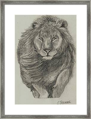 Framed Print featuring the drawing Lion by Christy Saunders Church