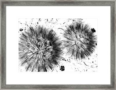 Lion Dance  Framed Print by Jerry Cordeiro