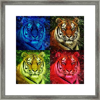 Lion Face Colored Squares Framed Print by Angela Waye