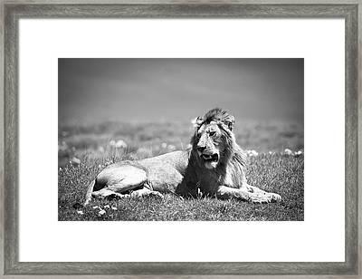 Lion King In Black And White Framed Print by Sebastian Musial