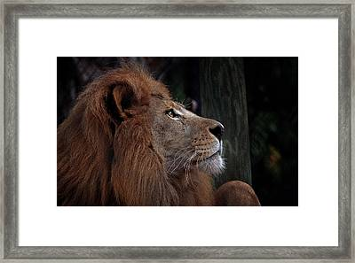 Lion Profile Framed Print