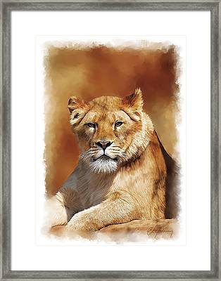 Lioness Portrait Framed Print by Michael Greenaway