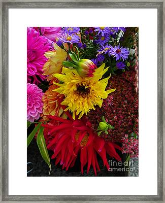 Lions In The Daisies Framed Print