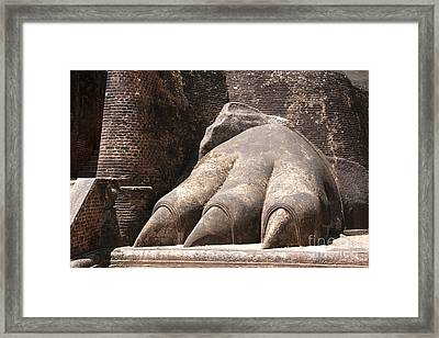 Lion's Paw Sigiriya Framed Print by Jane Rix