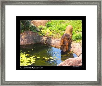 Lion's Terrain Framed Print by Rebecca Stephens