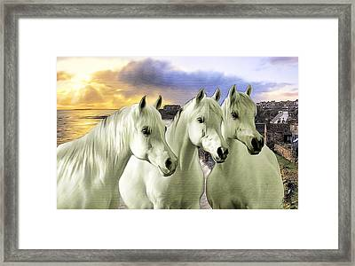Lipizzans Framed Print by Tom Schmidt